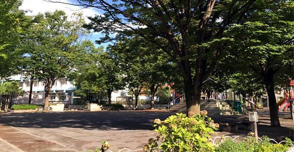 戸田市 東町公園 樹々