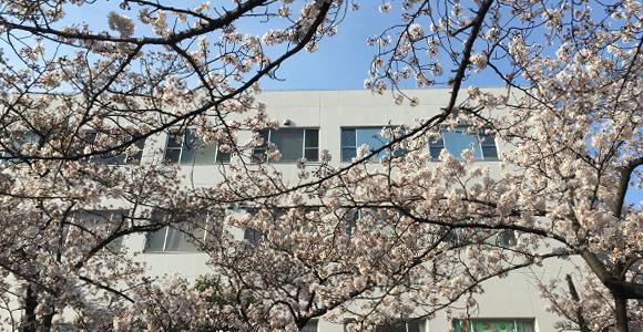 新曽南の桜とさくらパル