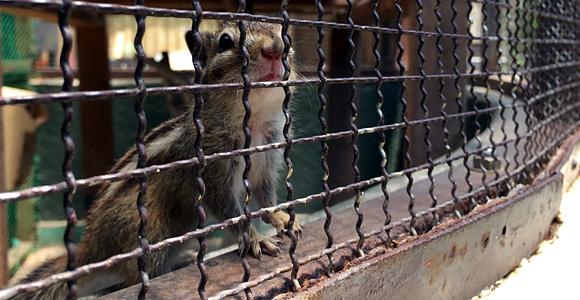 板橋区立こども動物園 りす