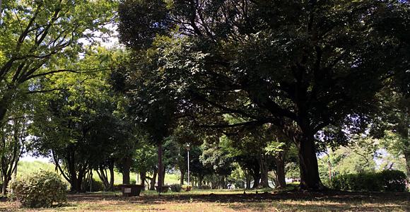 戸田公園 木漏れ日