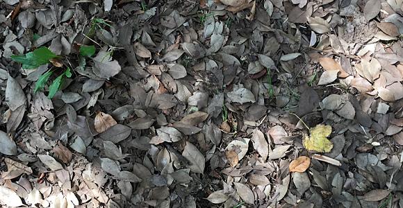 戸田公園 落ち葉