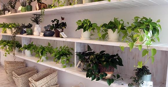 タリーズコーヒー戸田店 植物