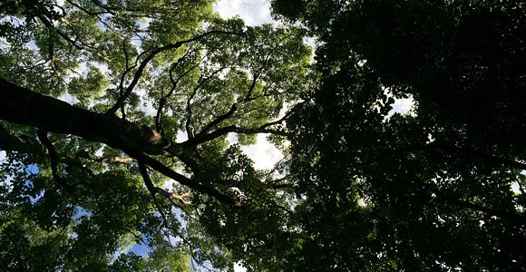 生い茂る樹々