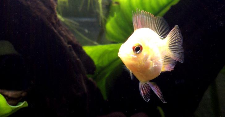 お買い物 熱帯魚