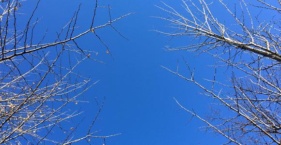 冬の空と樹々