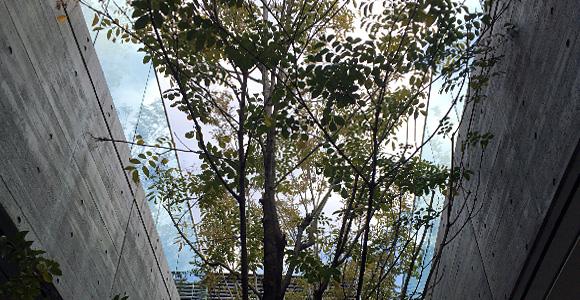テラスにある樹