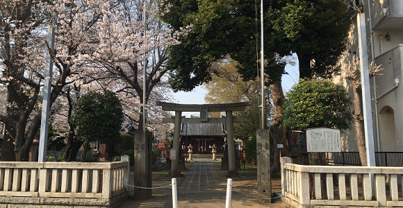 上戸田氷川神社の桜