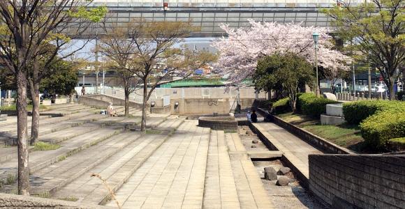 戸田橋親水公園の桜