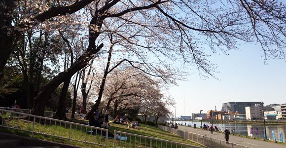 戸田公園漕艇場の桜