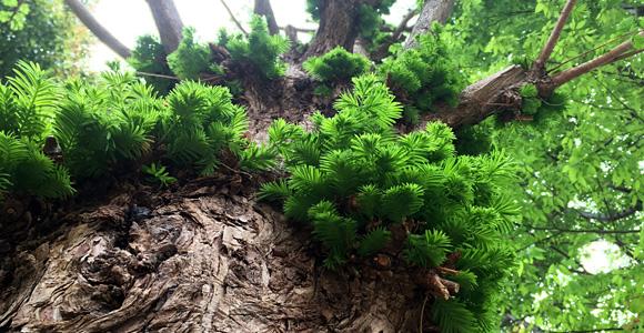 樹々の生命力