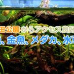 戸田公園からアクセス良好な熱帯魚、金魚、メダカ、水草のお店