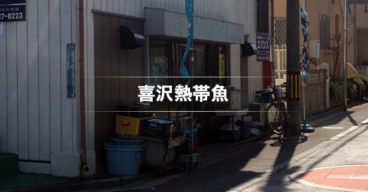 喜沢熱帯魚