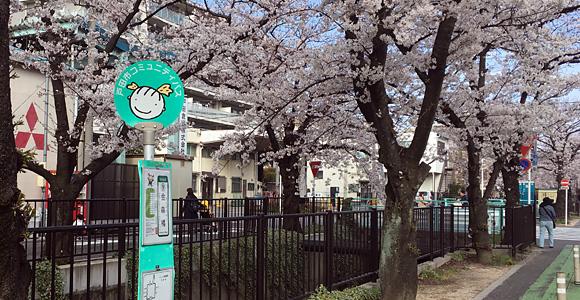 桜とバス停「金森橋」