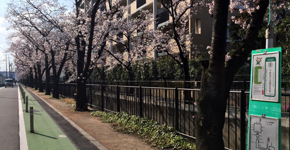 桜とバス停「下町さくら西ひろば」