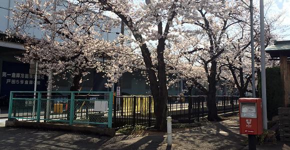 桜とポスト