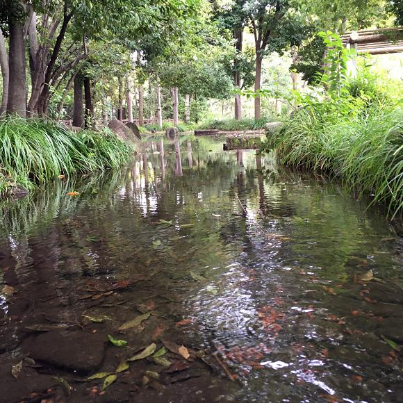 公園内の水辺