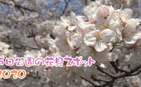 戸田公園の花見スポット2020