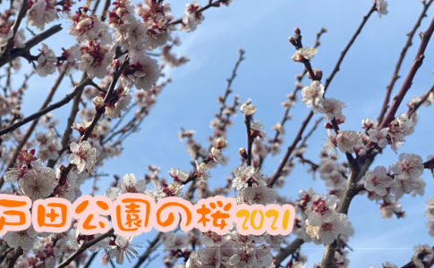 戸田市情報・戸田公園の桜 2021