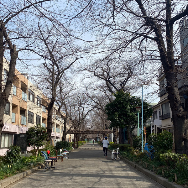喜沢の桜(3月4日)