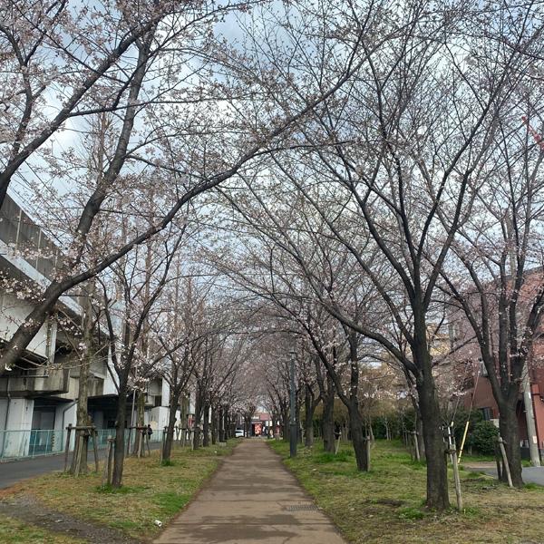 かじやさくら緑地(3月22日)