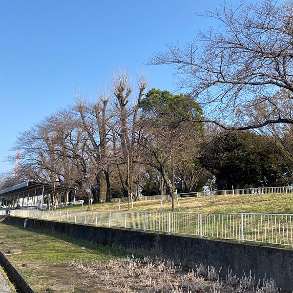 埼玉県営戸田公園(3月19日)