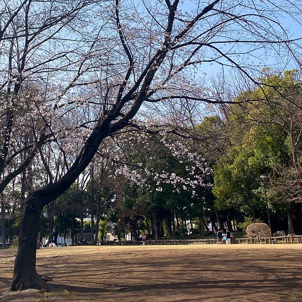 後谷公園(3月19日)
