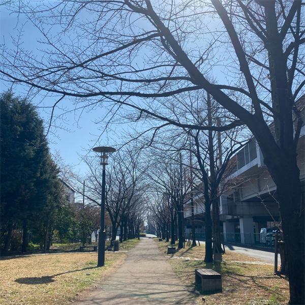 かじやさくら緑地(3月10日)