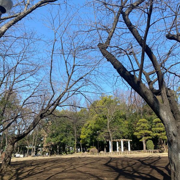 後谷公園(3月10日)