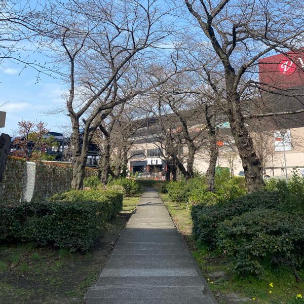 前谷公園(3月16日)