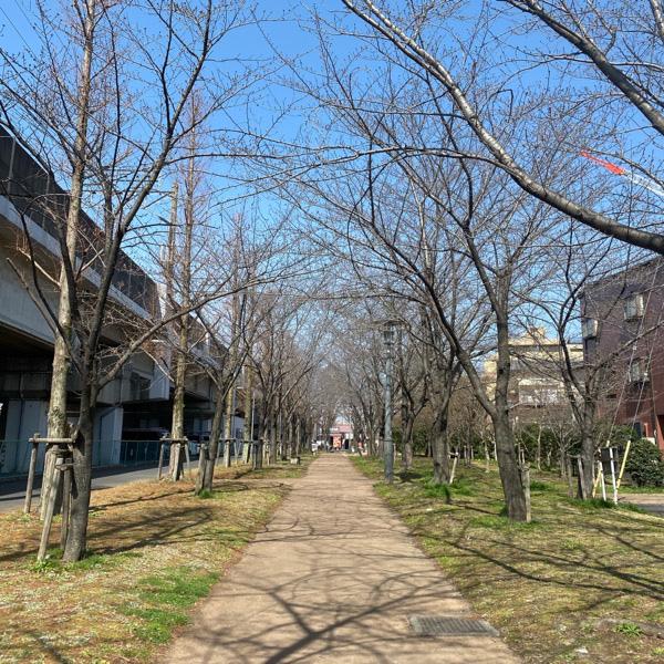 かじやさくら緑地(3月16日)