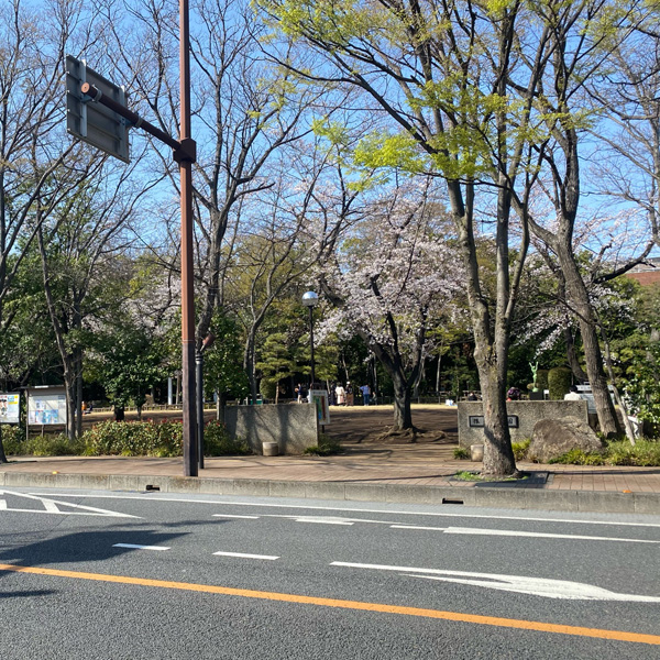 後谷公園の桜(3月23日)